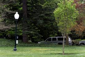Macron And Trump Planted Tree At The White House Why It Is Now