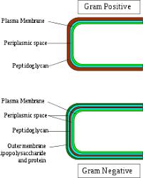 Gram Negative Bacteria Chart Gram Negative Bacteria Wikipedia