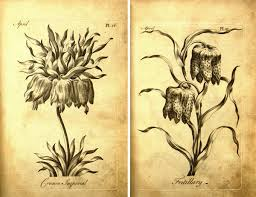 an 18th century botanical coloring book for s
