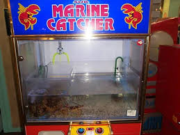 Lobster Vending Machine Unique Win Lobsters In A Claw Machine HAAHAHA A Geekologie