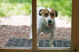 pet proof the screen door