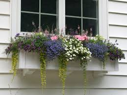 Window Boxes up to 71