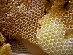 <b>Honeycomb</b> - Wikipedia