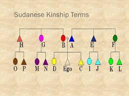 Chapter 8 Kinship And Non Kin Organization Creating Social