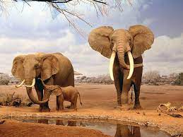 Elephant pictures, Animals, African animals