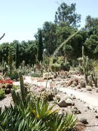 cactus gardens. finding the arizona (cactus) garden at stanford. or cactus gardens i