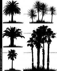 62 best palmas images on pinterest palm trees, landscapes and places Low Maintenance Houseplants fotos siluetas de árboles tropicales low maintenance house plants pictures