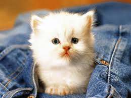 cute cats images and hd wallpapers free 3