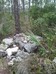 Walk Leaf strewn Trails in a Florida Forest Lucy Tobias