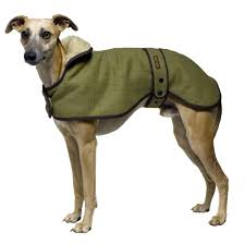 the major consideration in owning a whippet is because they are thin skinned and lean without much fat they feel the cold whippets need a coat in the