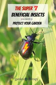 the super 7 beneficial insects you need to summon to your garden