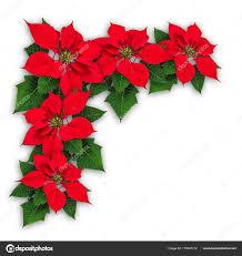 Weihnachtsstern Blüten Weihnachts Dekoration Stockfoto