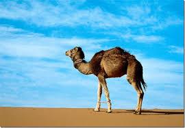 Великая пустыня Сахара Пустыня Сахара состоит из одной четверти вулканических гор одной четверти песка скал и покрытых гравием равнин и маленьких областей постоянной
