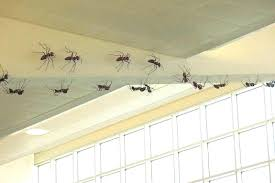 ants in bathroom. Ants In Bathroom How To Get Rid Of Unique O