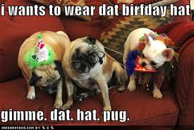 funny-dog-pictures-birthday-hats.jpg via Relatably.com