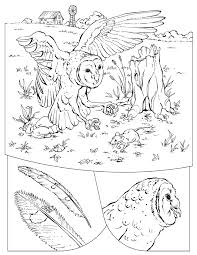 Small Picture Barn Owl coloring page Barn Owl free printable coloring pages