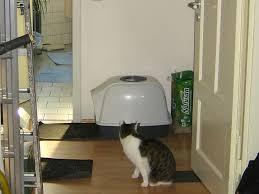 Trittschall entsteht durch das gehen auf einem fußboden oder andere begebenheiten, wie einer vibrierenden waschmaschine. Unsaubere Katze 10 Grunde Und Tipps Haustiermagazin