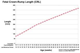 Crown Rump Length Embryology