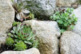 Small Picture Impressive Building A Rock Garden 17 Best Ideas About Rock Garden