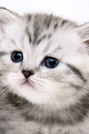 cute cat wallpaper 423639