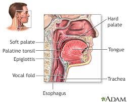 tonsillitis information mount sinai