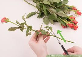 image titled make fresh flowers last longer step 12
