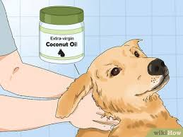 how to use coconut oil for flea and