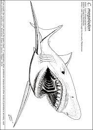 On parts of a bull shark