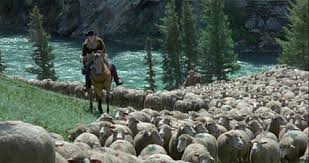 a great love story brokeback mountain far flungers roger ebert brokeback sheep river jpg