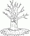 Раскраски осеннее дерево