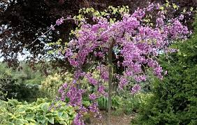 other plants for a four season garden