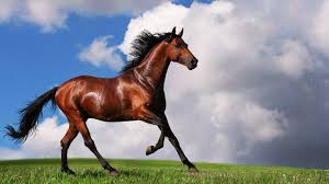chestnut arabian horse wallpaper. Arabian Horses Wallpapers Wallpaper Cave Image Source From This To Chestnut Horse Amazing