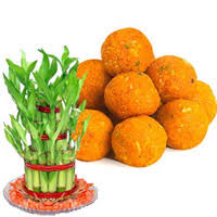 gift delivery bangalore to send lucky bamboo plant with 500 gm motic ladoo