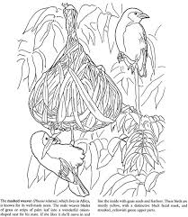Small Picture 584 best Coloring pages to print Birds images on Pinterest