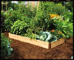 Small Picture Raised Bed Garden Design Stone The Garden Inspirations
