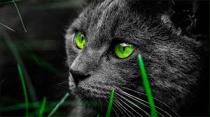 black cats with green eyes wallpaper. Simple Eyes Green Eye Black Cat Wallpaper And Cats With Eyes T