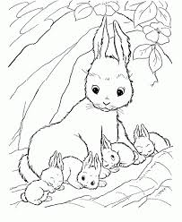 We have simple images for younger coloring fans and advanced images for adults to enjoy. Baby Bunny Coloring Page Coloring Home
