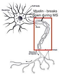 nerve.nida degenerative nerve disease symptoms study com on chapter 12 stoichiometry worksheet answers