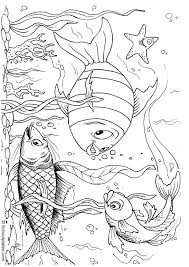 Small Picture 2109 best Fish images on Pinterest Drawings Fish and Animals