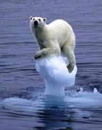 how to prevent global warming polar bear dying
