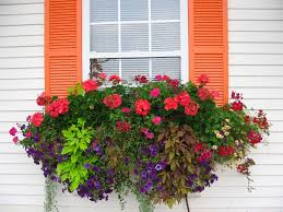 i love this full sun container from dewald gardens it has a beautiful mounding shape sort of like an eye that i find really pleasing