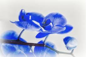 flower orchid blue flowers flower wallpaper hd 16 9 high definition