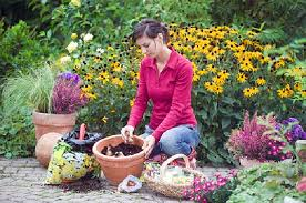 daffodil bulbs planting tips