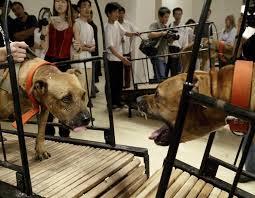 Banned Sun Yuan Peng Yus Controversial Dogs Video