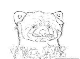 レッサーパンダの下絵陸上の動物のぬりえ