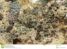 Bread Mold Stock Image Image Of Fungal Mold Background 49973227