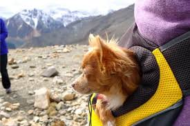 The 50 Best <b>Dog Backpacks</b> and <b>Carriers</b> of 2019 - <b>Pet</b> Life Today