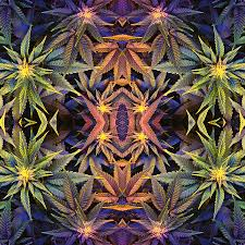 Weed Designs Canna Banna Design From The Cannabis Marijuana Weed Collection