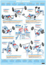 Weight And Exercise Chart Details About Chest Muscles Weight Lifting And Body Building Poster Exercise Training Chart