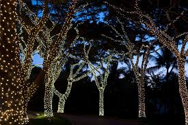 Decorating Outside Tree With Lights This Page Cannot Be Found Outdoor Fairy Lights Fairy